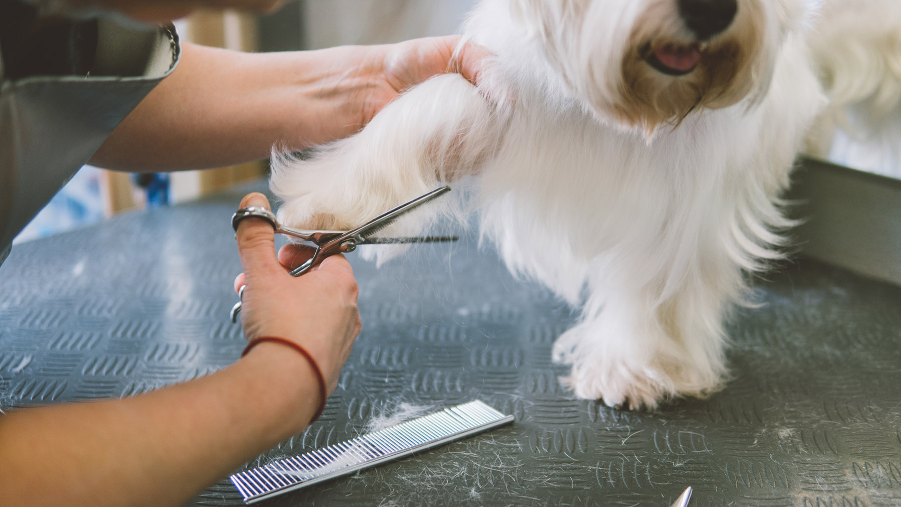 Dog Grooming   Paisley   Glasgow South